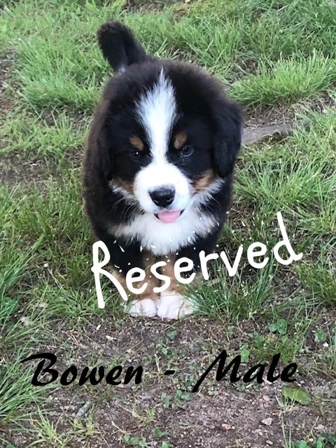 Bowen-1-7wks-res