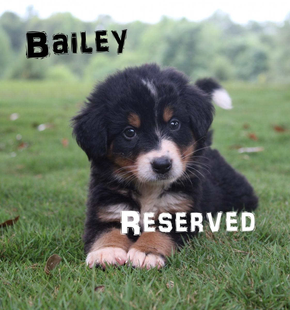 Bailey-4
