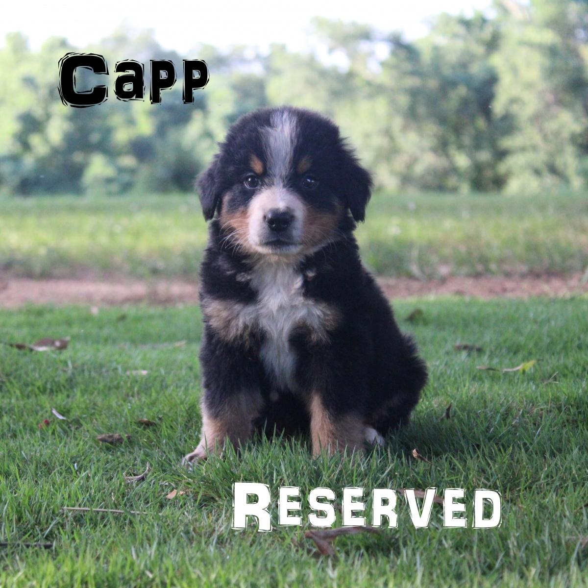 Capp-4