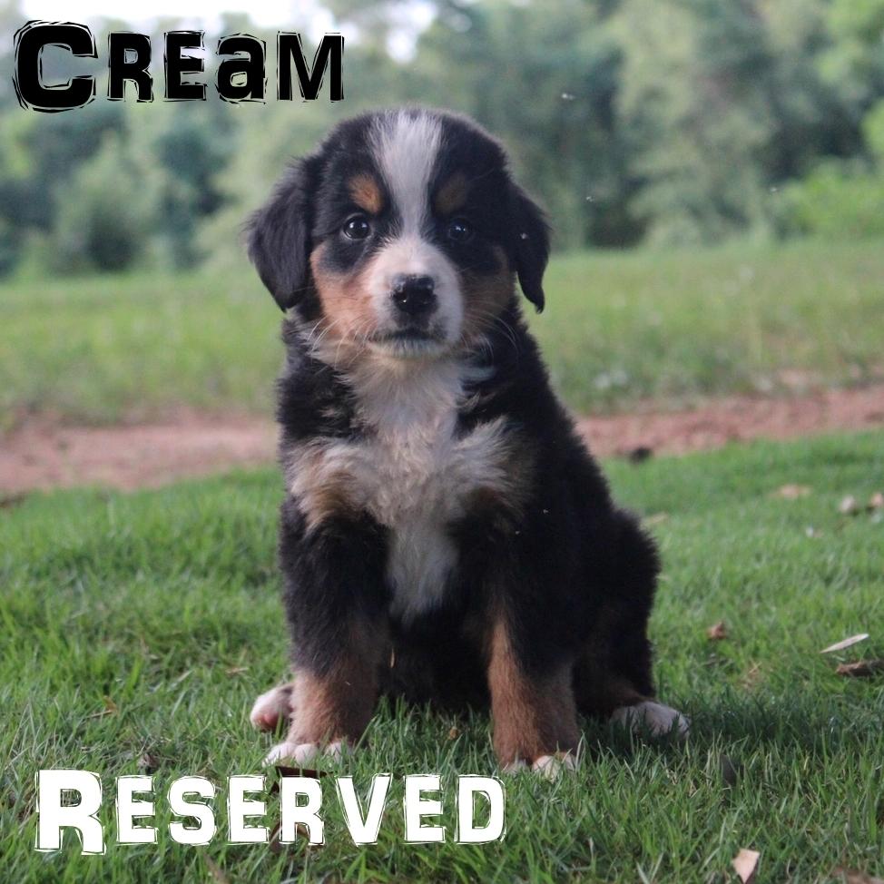 Cream-4