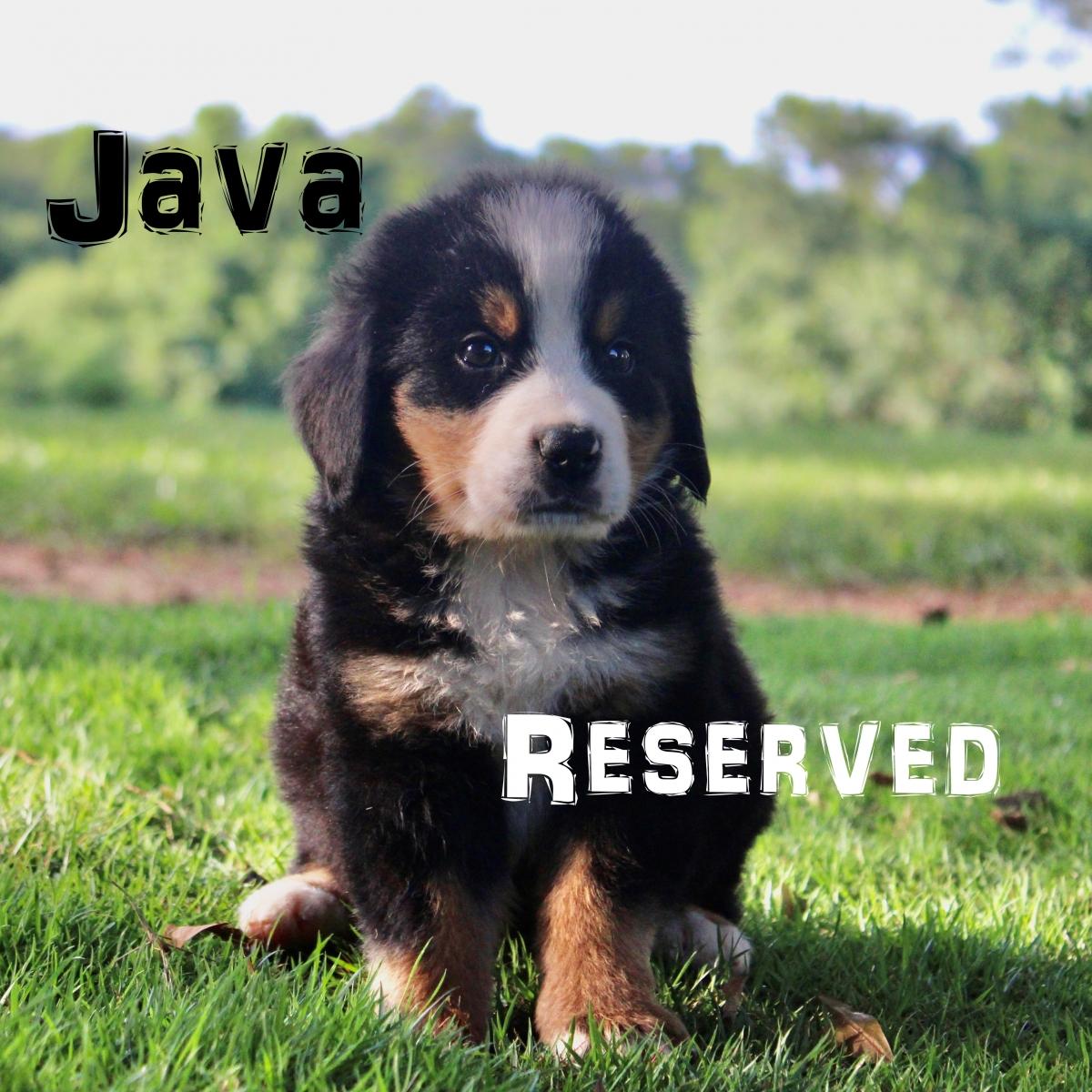 Java-4