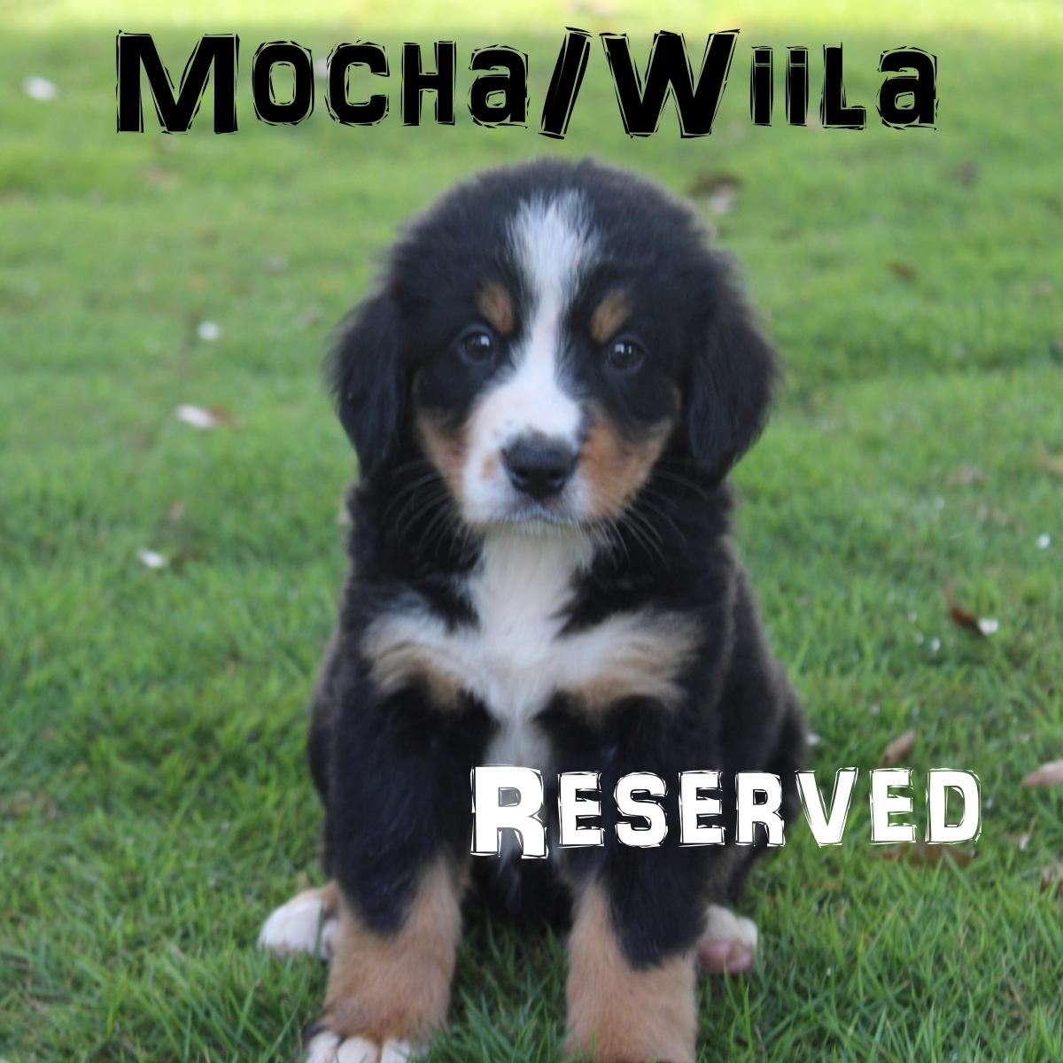 Mocha-4