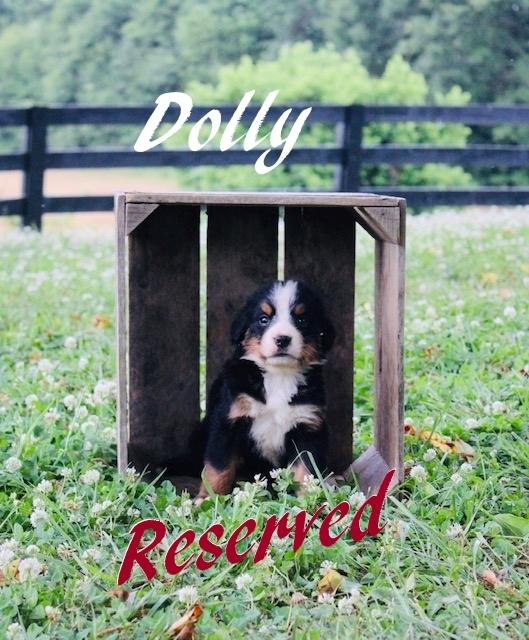 1_F-Dolly-5wks