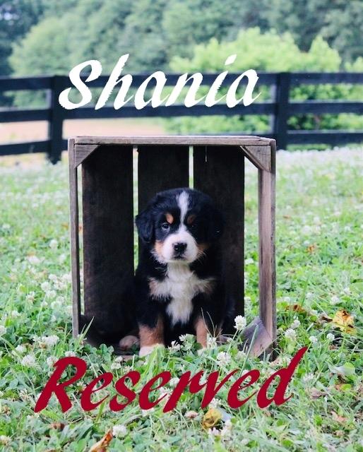 1_F-Shania-5-wks