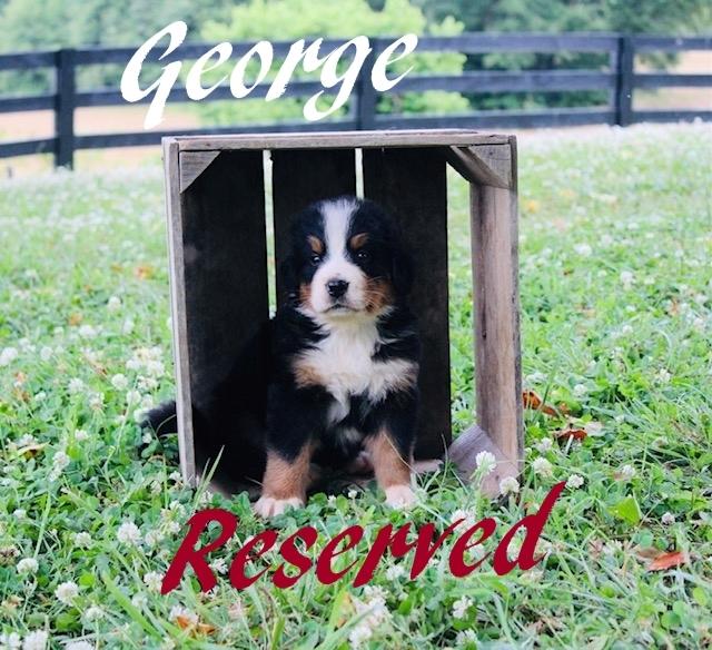 1_George-5wks