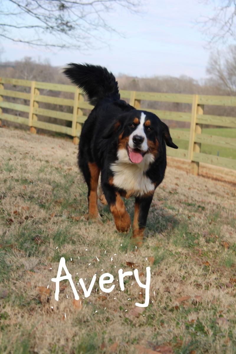 Avery-4