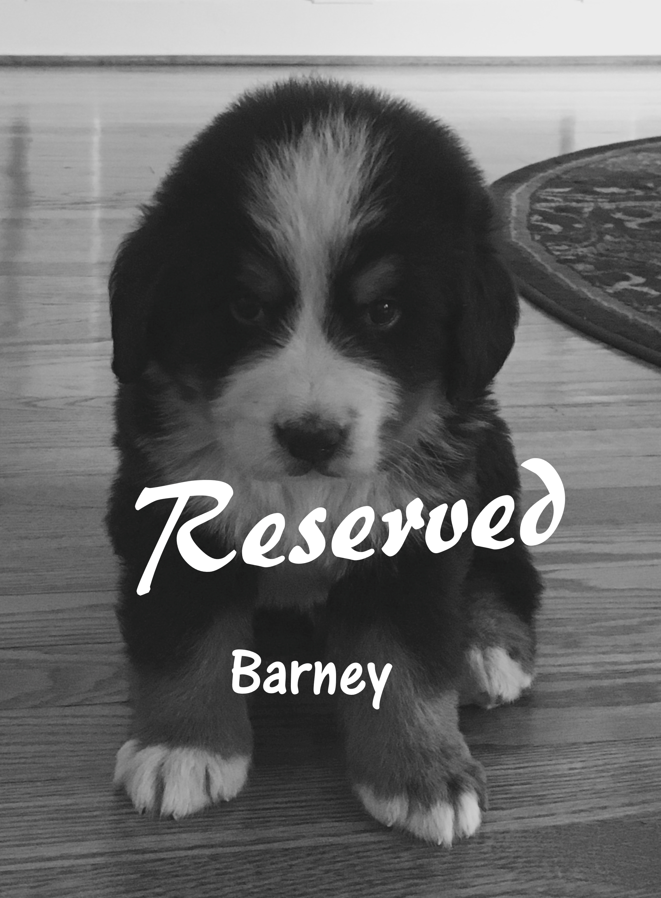 Barney 5 w