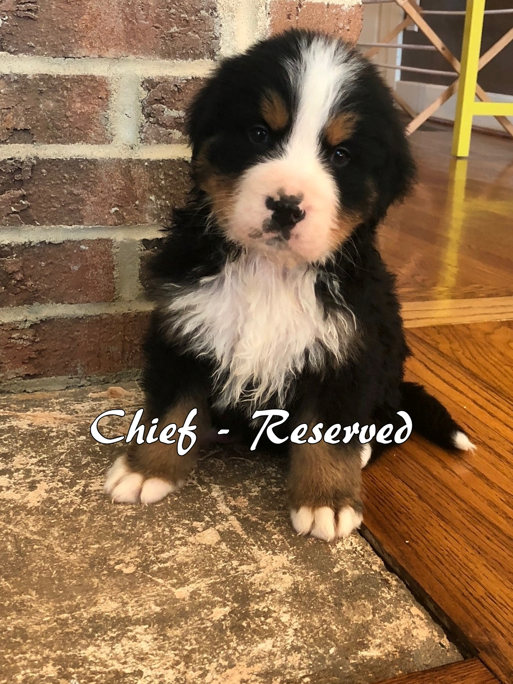 Chief - 6weeks1 resv.