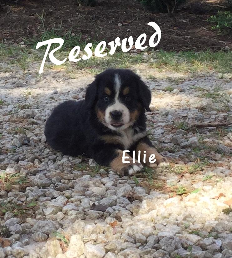 Ellie 5 w