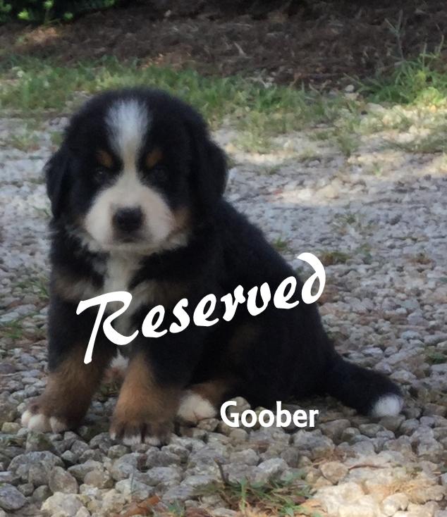 Goober 5w