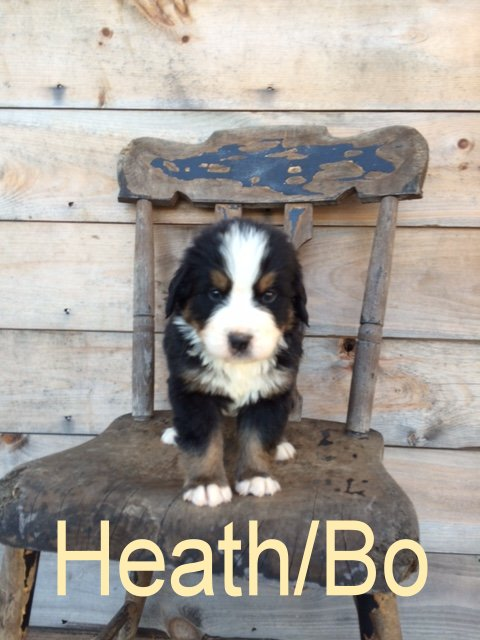 HeathBo 4 wks