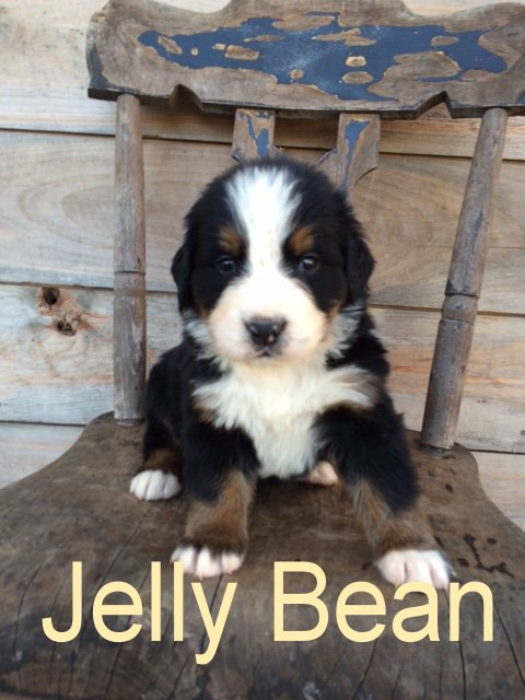 Jelly Bean 4 weeks