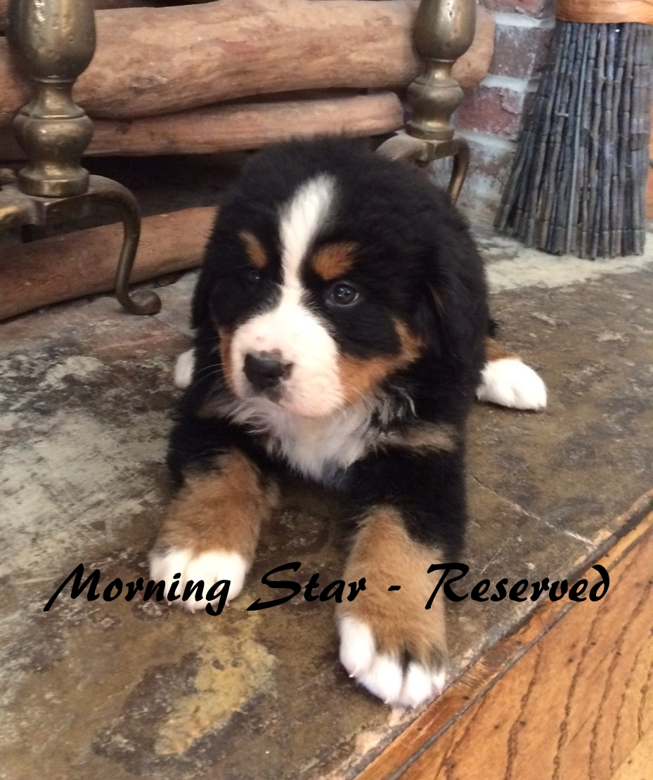 Morning Star - 6weeks RES