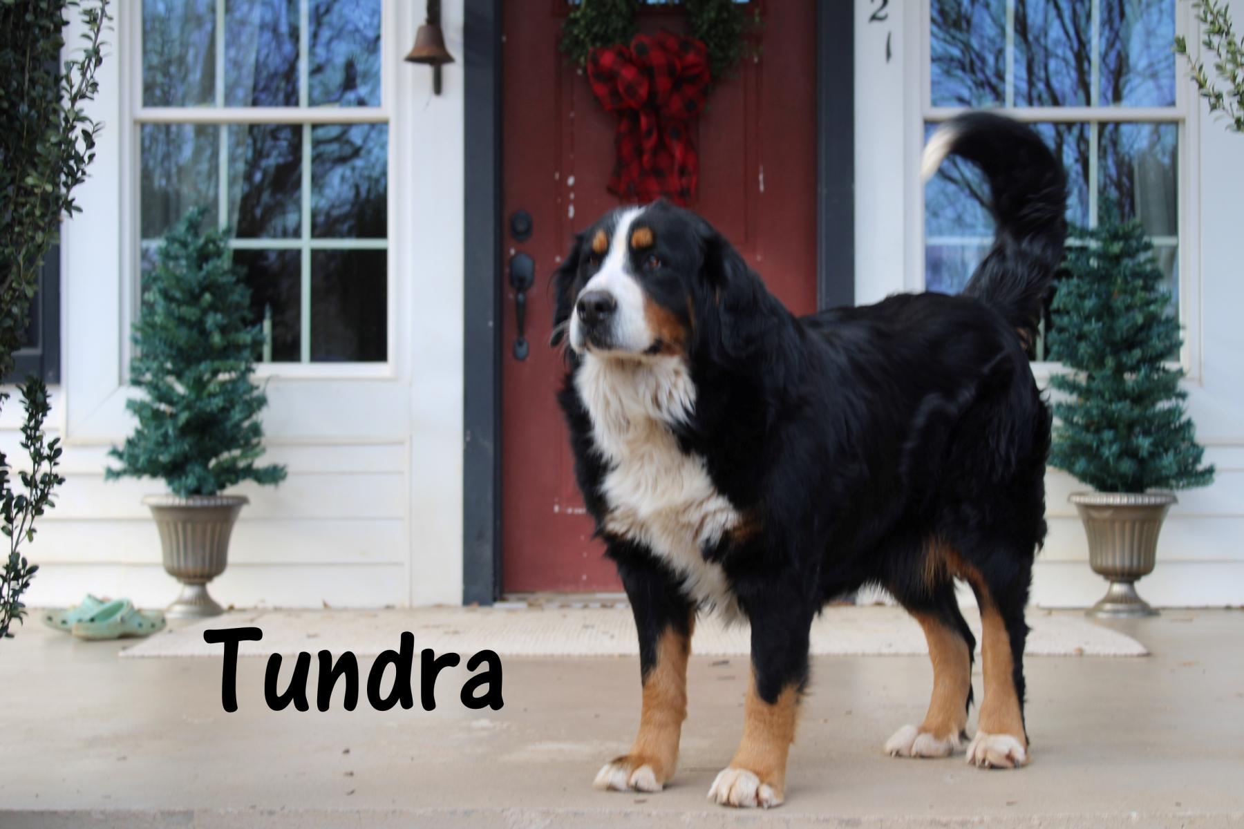 Tundra-4