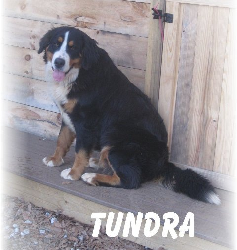 Tundra - Barn pic 022.JPG