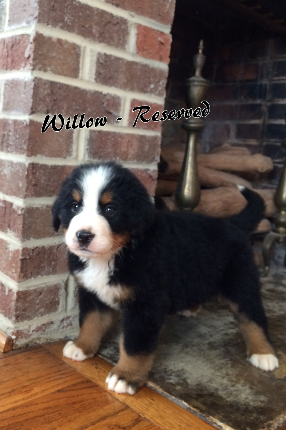 Willow - 6weeks