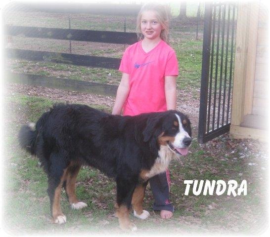Tundra - standing 035.JPG