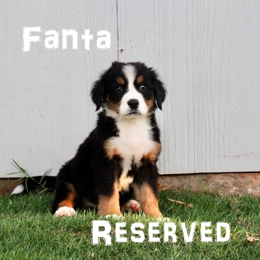 Fanta-6