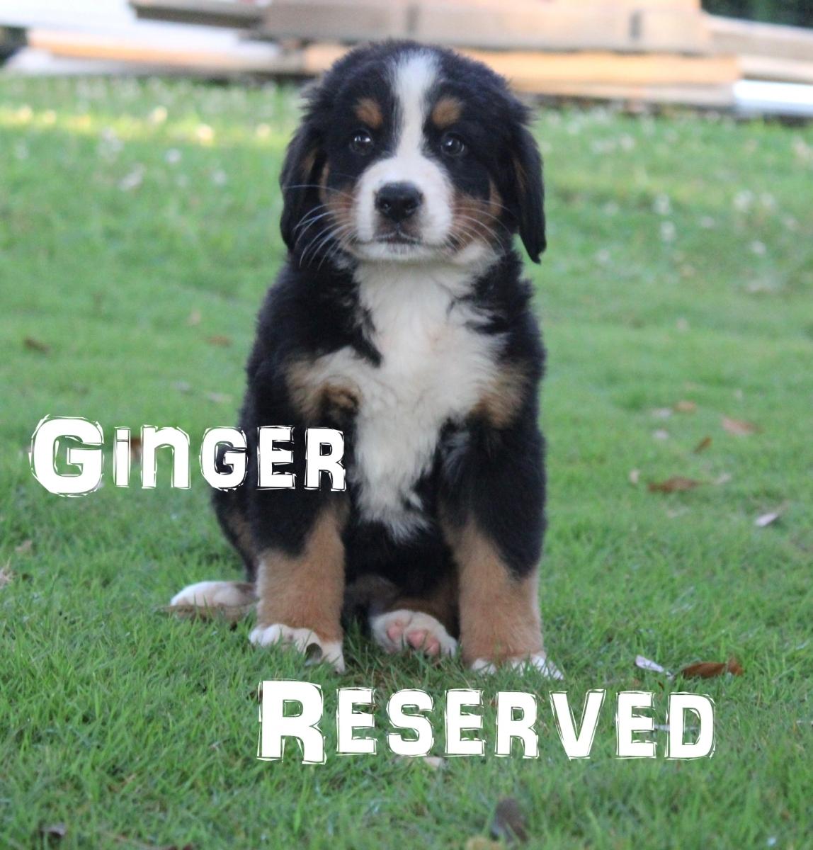 Ginger-6
