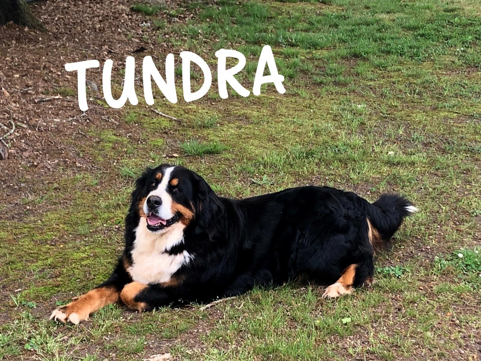 Tundra-2019