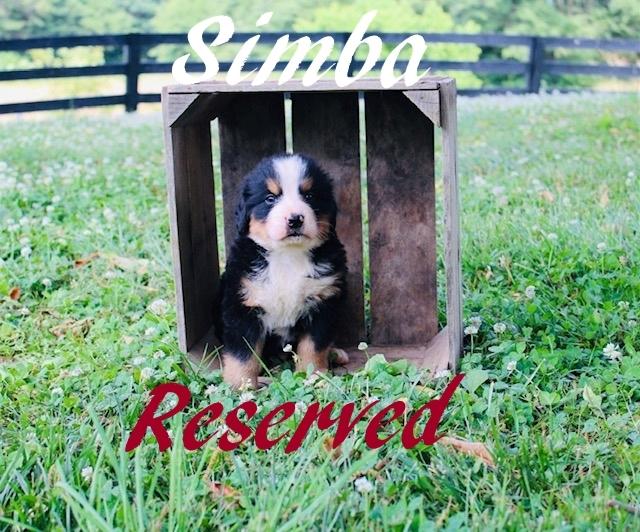 1_Simba-5wks