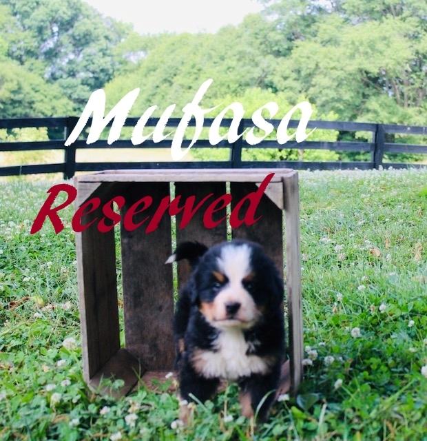 2_Mufasa-5wks
